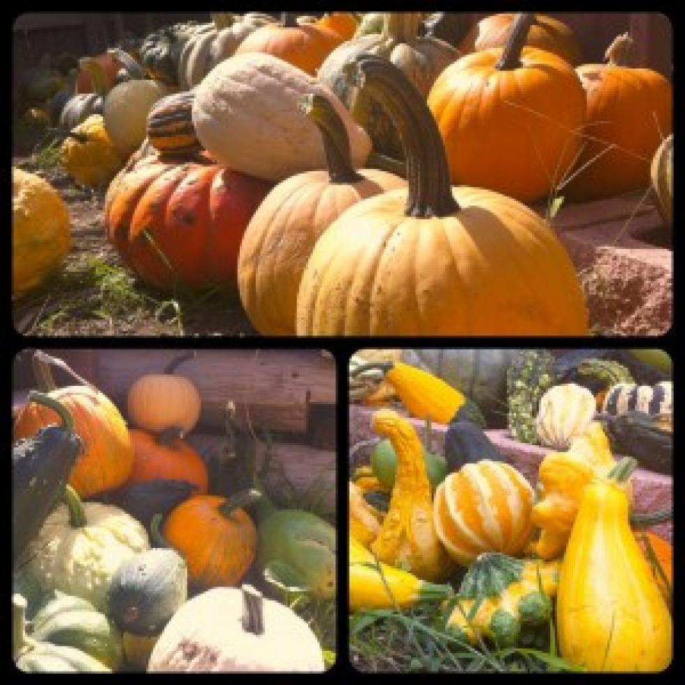 Amarillo Botanical Gardens Hosting Pumpkin Fest