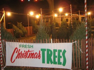Boy Scout Troop 80 Will Be Selling Those Real Christmas Trees